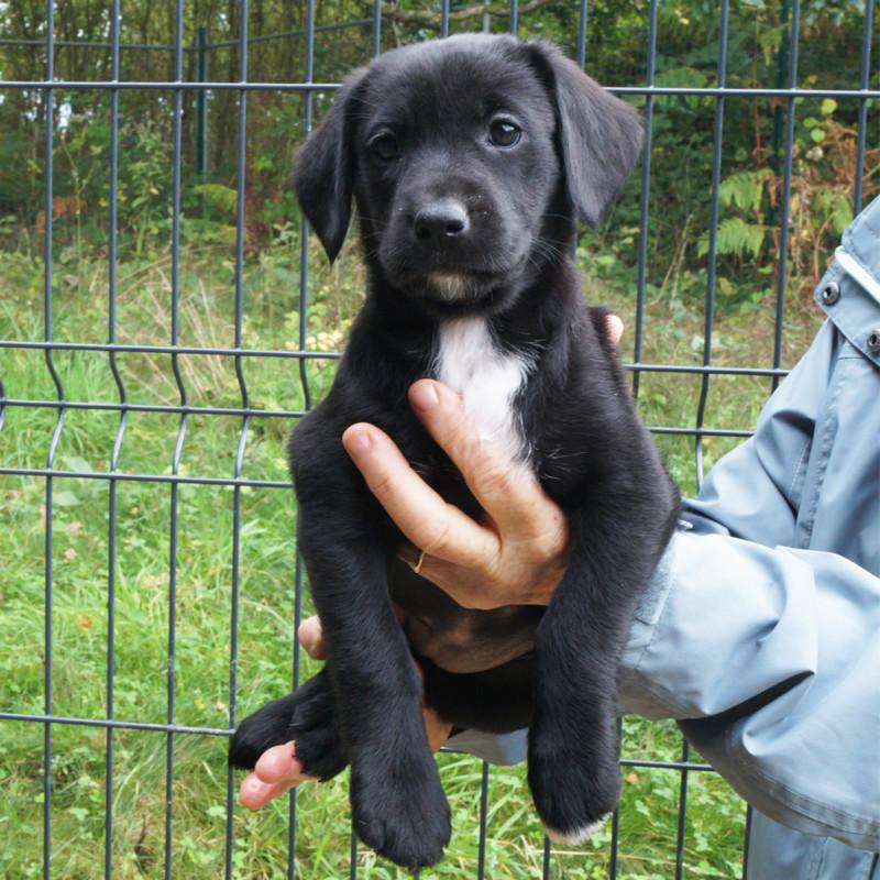 9 Chiots A Adopter Spa Du Pays De St Malo